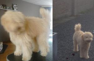 Buddy voor en na staand