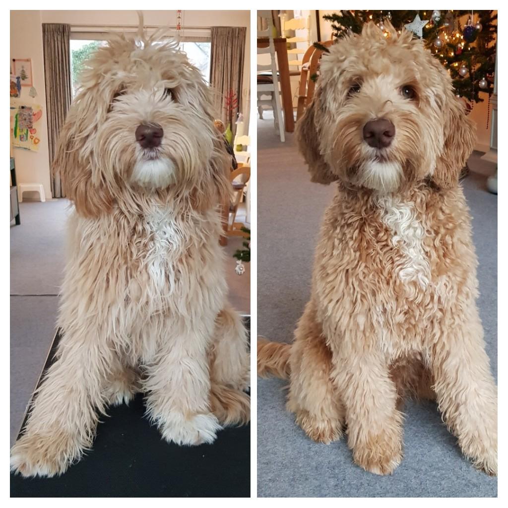 Milo voor en na