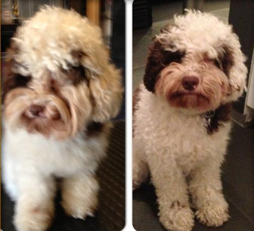 voor en na Murphy